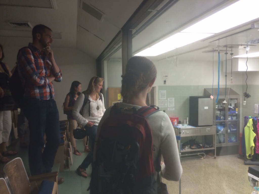 We took a tour of the Veterinary Medicine Teaching Hospital.