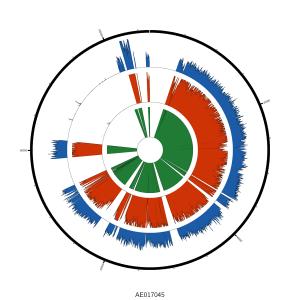 pMT1_plasmid