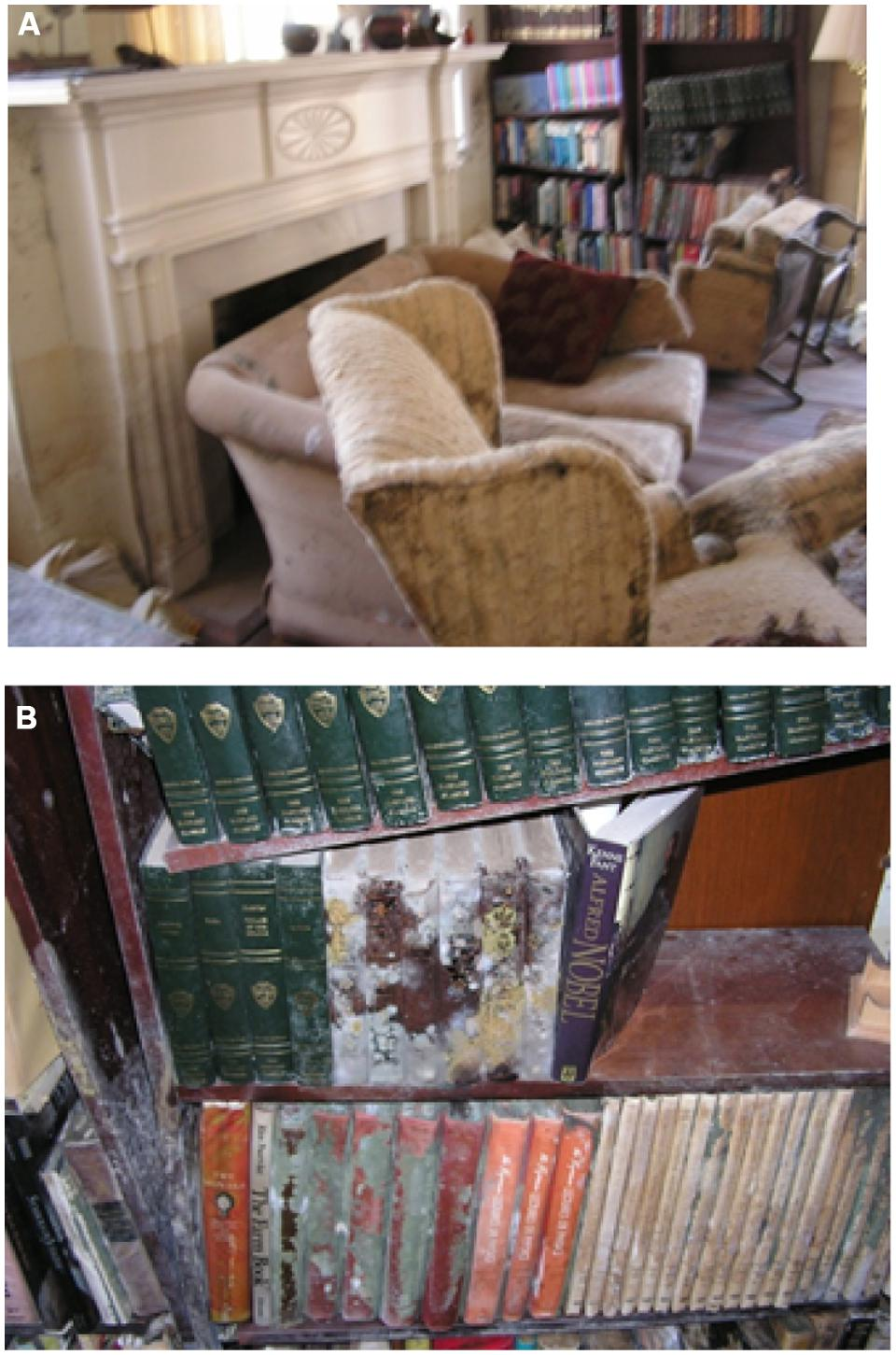FIGURE 1. (A) The living room of the author's New Orleans home on October 6, 2005 in the aftermath of Hurricane Katrina. (B) Closer view of moldy books on flooded book shelf.