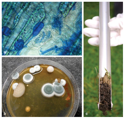 the investigation of microbial diversity in Innovative microbial ecological dna microarrays such as phylochip and geochip that have been developed for investigating the composition.