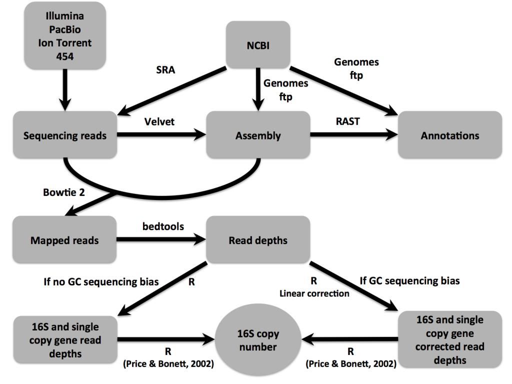 16Stimator pipeline overview.
