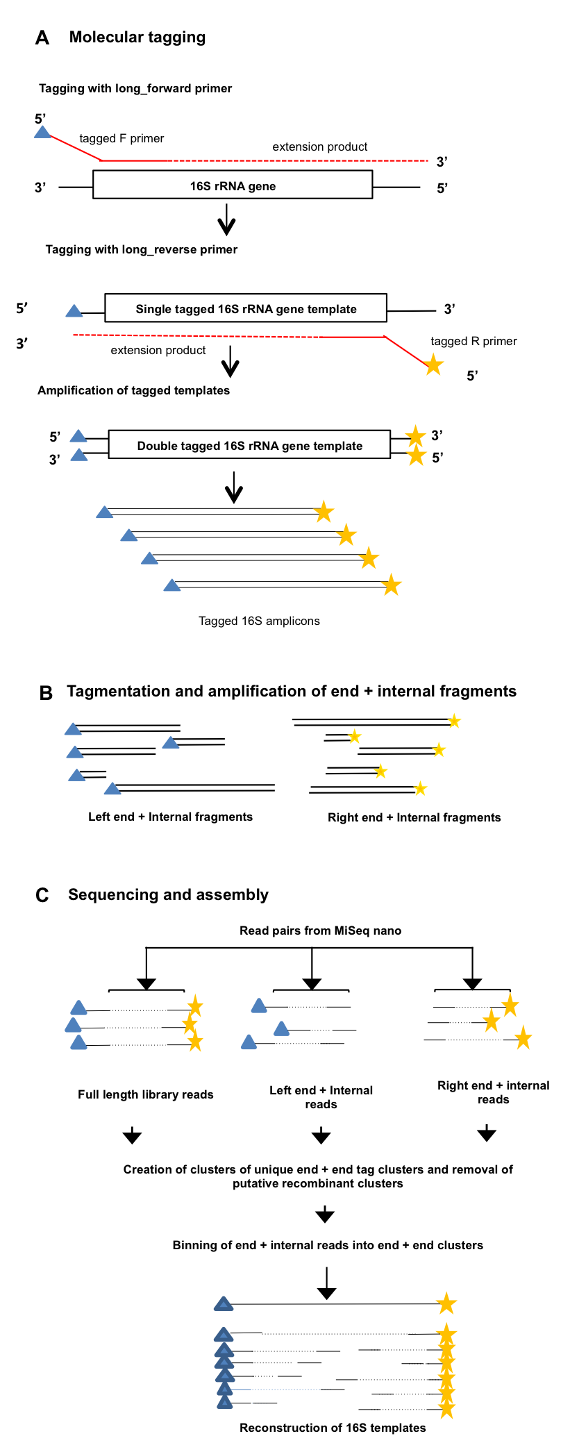 figure 1 overview of the long read method a 16s rrna gene template