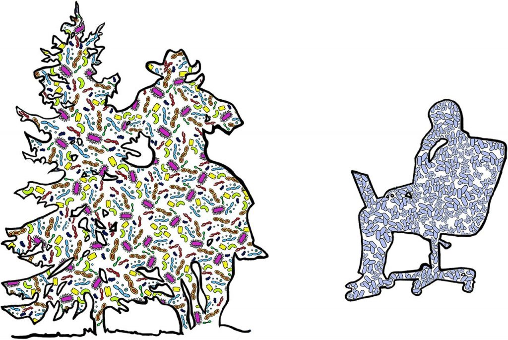 Microbial diversity in outdoor environments and BEs. On the left is the silhouette of a cowboy brushing past a pine tree while riding a horse. On the right is the silhouette of a person sitting in an office chair and working on a laptop. Blue microbes are human associated, while other colors represent nonhuman microbial diversity.