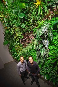 An example of a living wall (public domain)