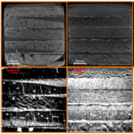 Influence of water and fungal growth on porosity changes in plywood core