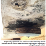 Damp buildings often invite mold