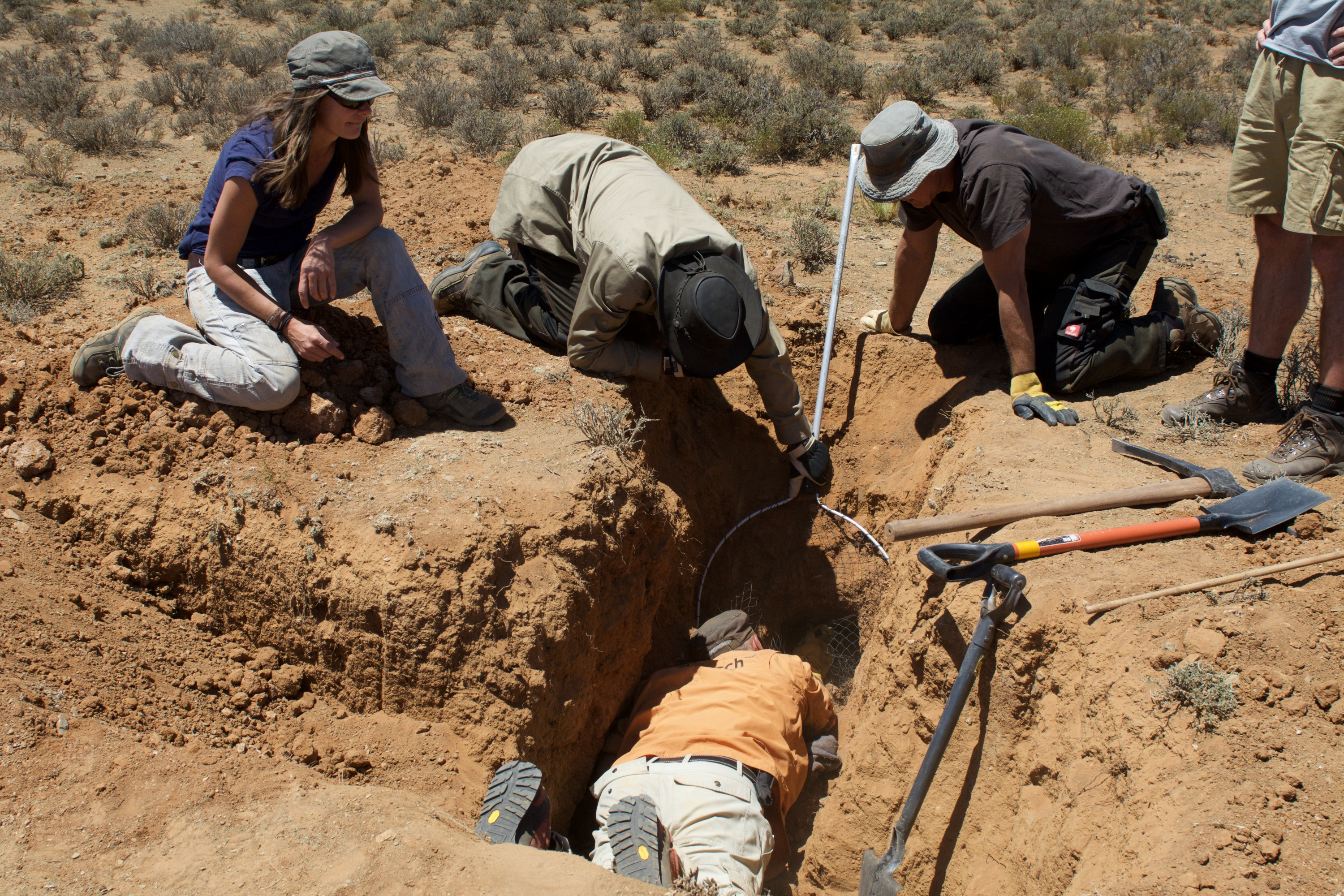 The Black-Footed Cat Working Group digs out a burrow. Photo by Holly Ganz.
