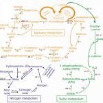 Metabolic pathways of from the metagenomes.