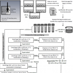 Schematic representation of the steps involved in sampling and sample preparation for flow cytometric and 16S rDNA sequencing studies