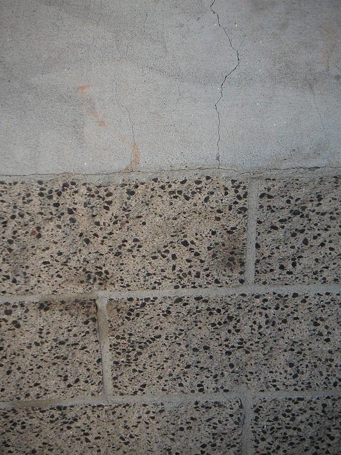 Fungi for self-healing concrete