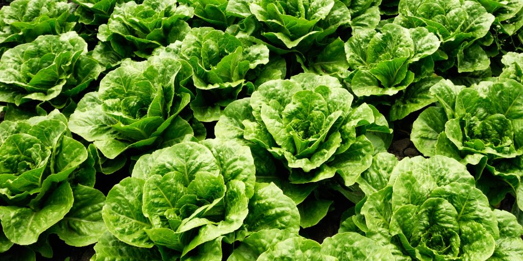Prufrock and why nobody should lettuce love that dirty water.