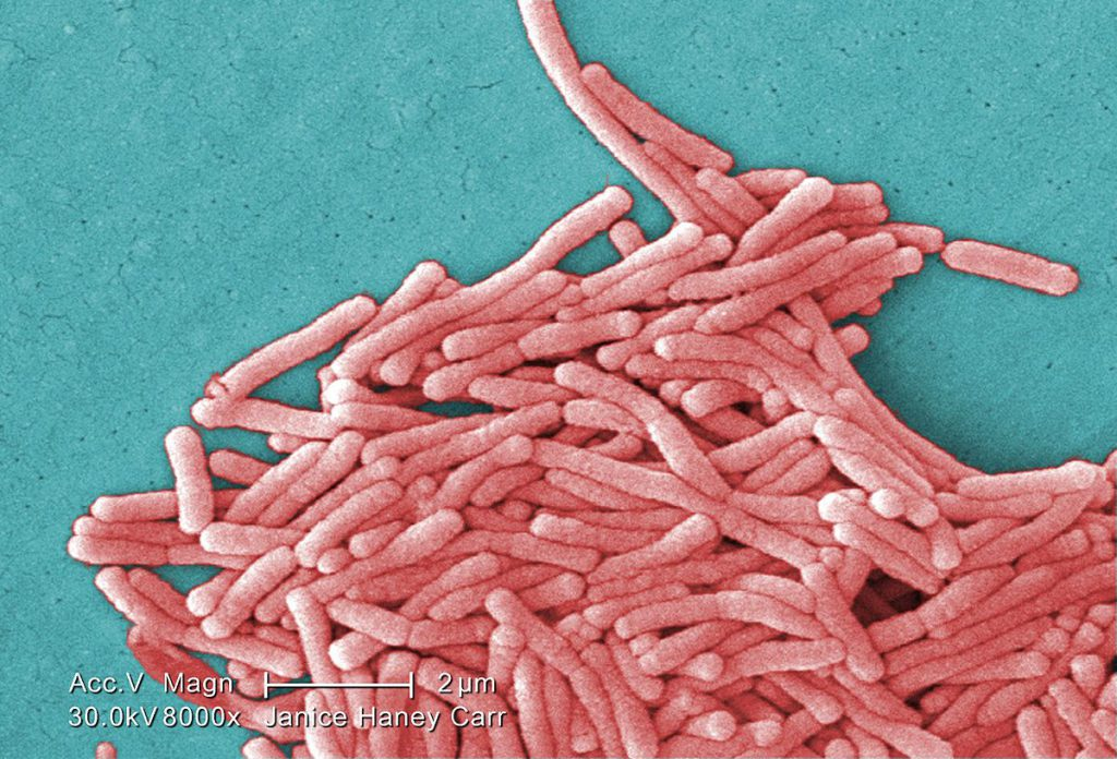 Legionella sequencing in tap water and clinical isolates from Flint, MI